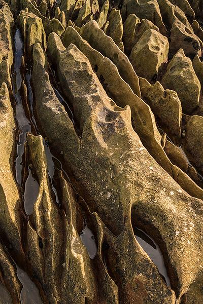 Kilminning Coast Nature Reserve, Fife Ness, Scotland