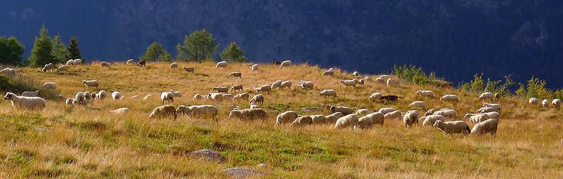 Alpage, Croix de Lognan, Massif du Mont Blanc