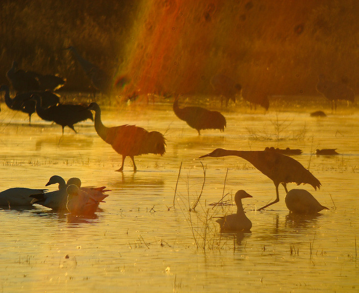 Bosque Dawn 9: (lens artifact)