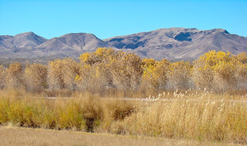 Autumn on the Rio Grande