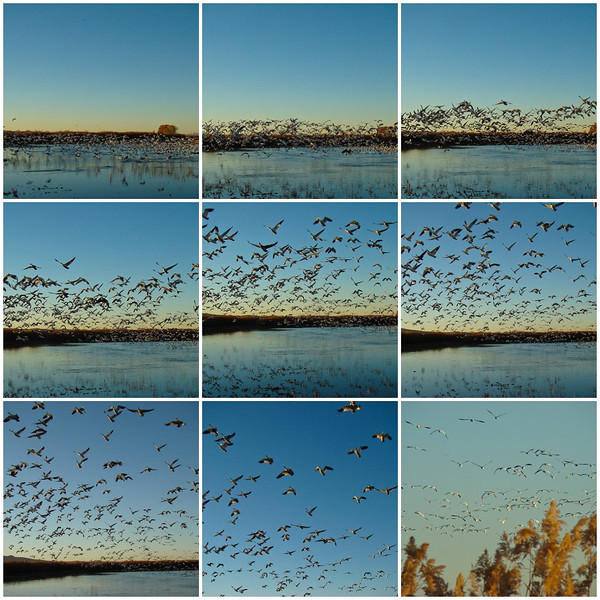 Geese Arise Sequence