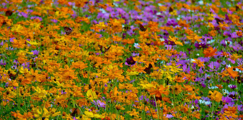 Wall of Wildflowers