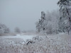 Snowy marsh