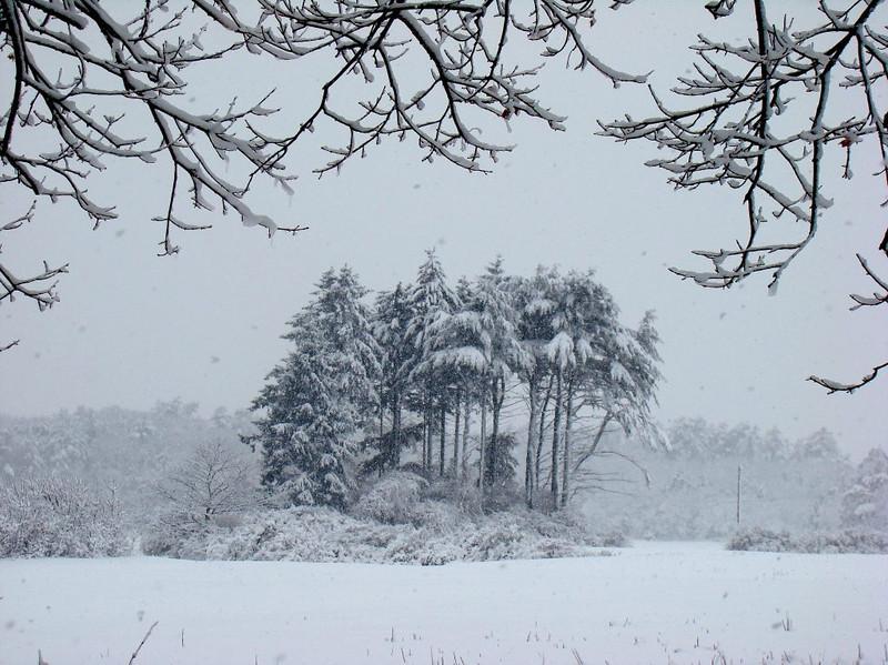 Crowning snow
