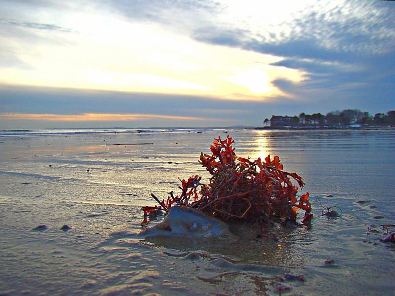 Seaweed sunset