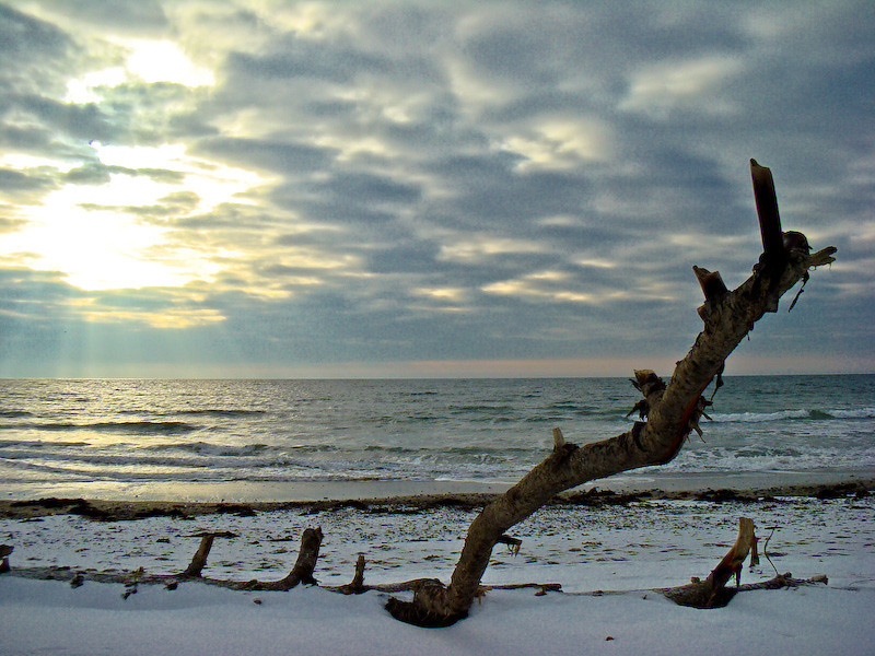 Winter driftwood/winter light