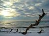 Winter driftwood/winter light