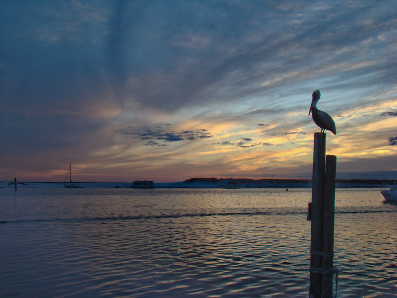 Pelican eyes the sunset