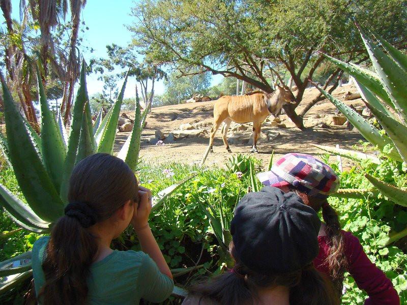 Photo op! Giant Eland