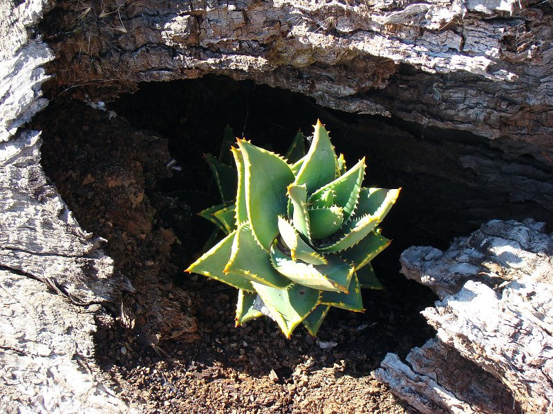 Ornimental planting