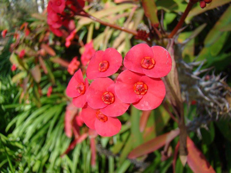 Thorn Flower