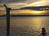 Preening the sunset