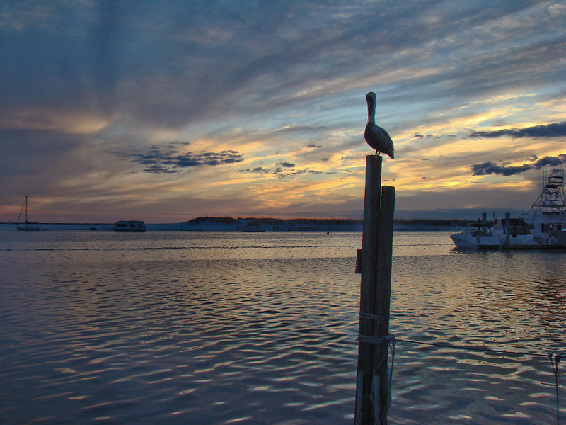 Pelican Post Sunset