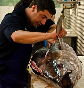 a whole tuna under the knife