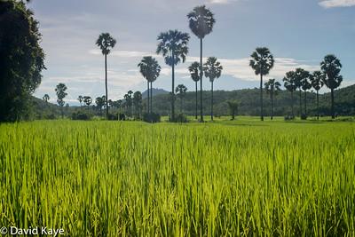 Kampong Chhang (4)
