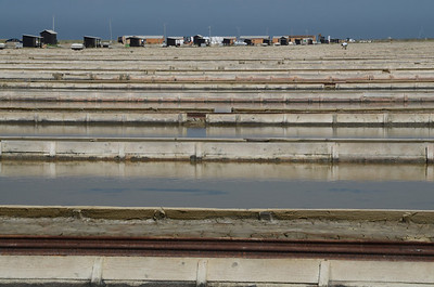 The shallow waters of the Secovlje saltpans (5)
