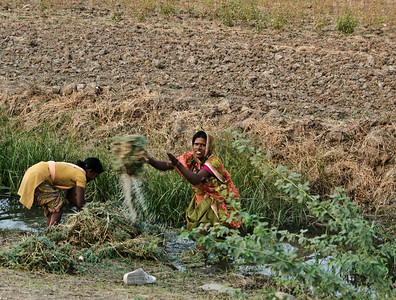 His wife and daughter wash chickpeas in the stream opposite