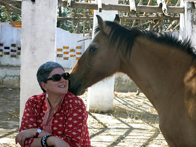 A feral horse becomes friendlier after sharing our picnic lunch