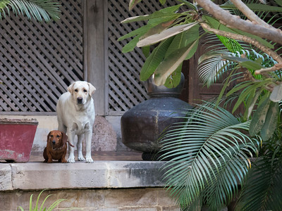 and the well bred dogs of Utelia Palace greet us at our next accommodation