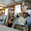 'Happy' a mixed breed with owners Olivia Turrell of Topsham, Maine and her mother Adri Turrell of Piermont, NY.