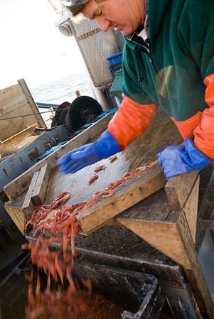 Craig Pendleton, Coordinating Director of NAMA (the Northwest Atlantic Marine Alliance) aboard his shrimp boat Ocean Spray out of Camp Elliis (Saco), Maine.