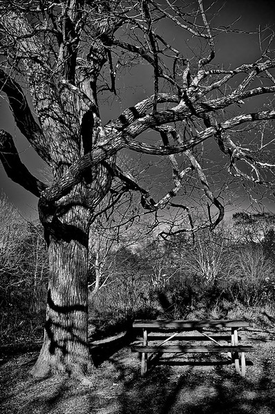 Tree in Black and White, New River Gorge, West Virginia