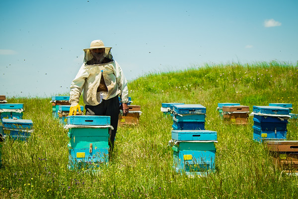 Beehives  in the fields around Ani.