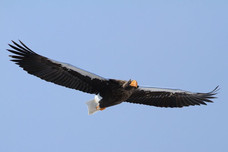Eagle Season 2010/11