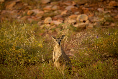 The Kimberley, Australia. Photo copyright Genevieve Hathaway.