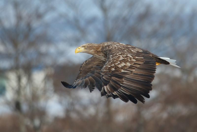 Eagle Season 2011/12