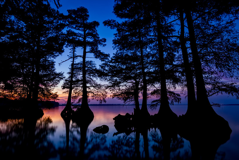 Cypress Silhouettes on Reelfoot