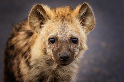 The Cuteness of a Hyena