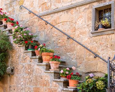 Civita Flowers