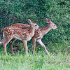 Twin Fawns_20070610_
