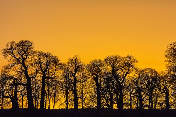 Petworth Park