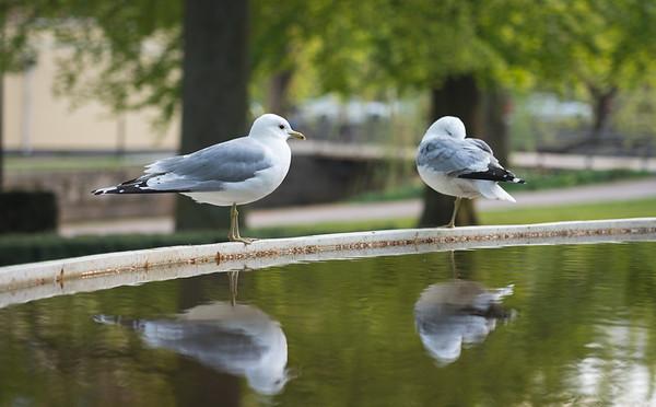 Birdos!