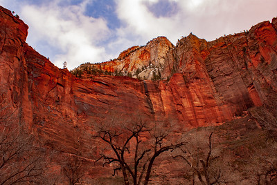 Red Cliffs of Zion National Park in Winter