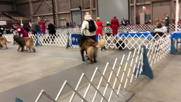 Best of Breed - Friday