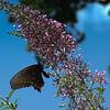 Butterfly in West Virginia