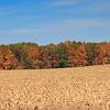 Corn fields, Fort Wayne, Indiana