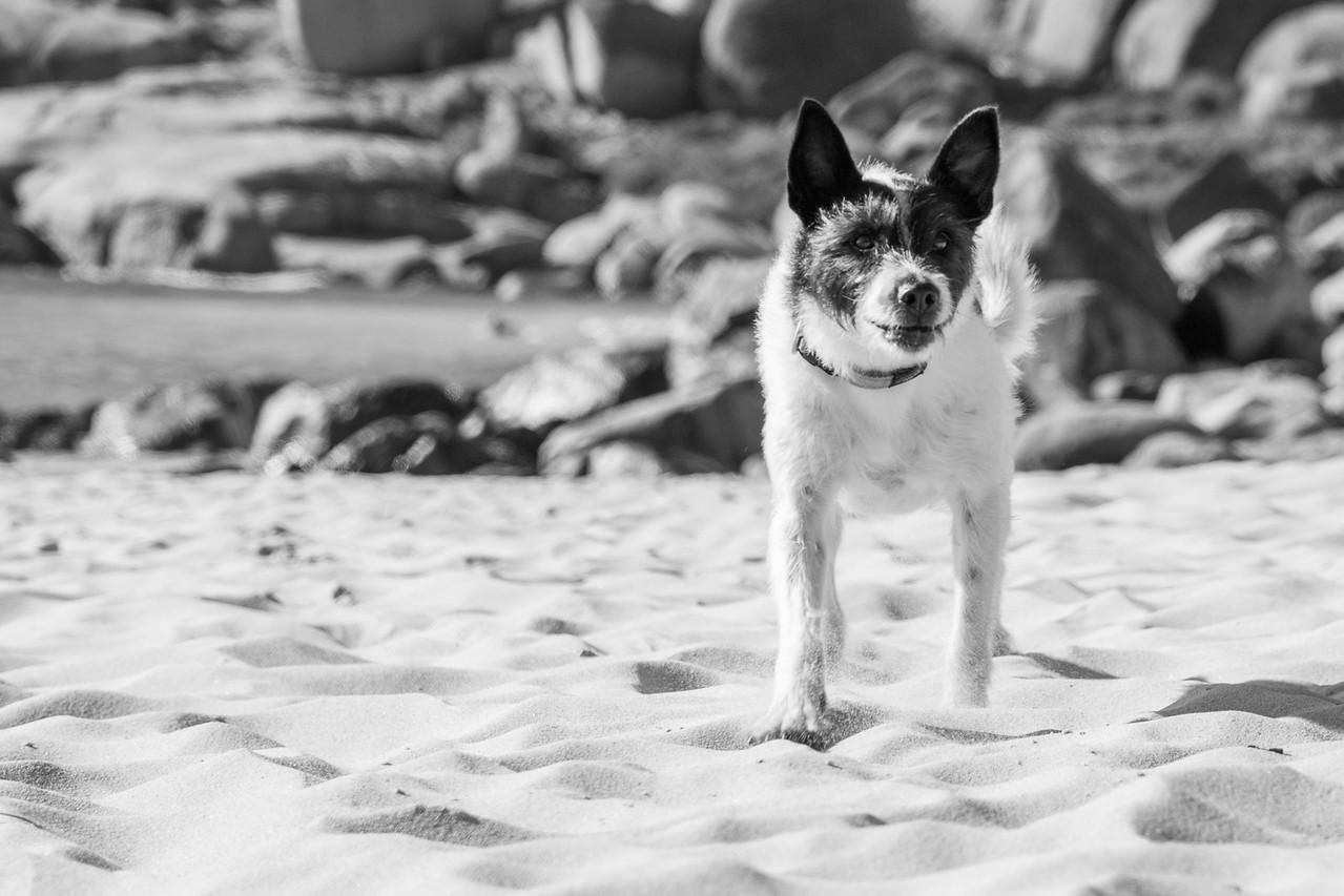 Frontline_Llandudno_Beach-17