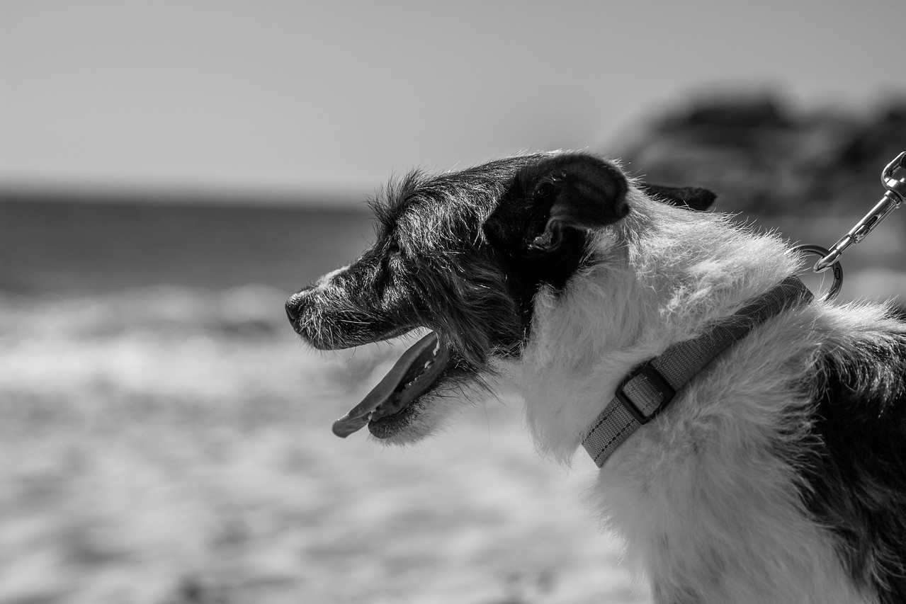 Frontline_Llandudno_Beach-7
