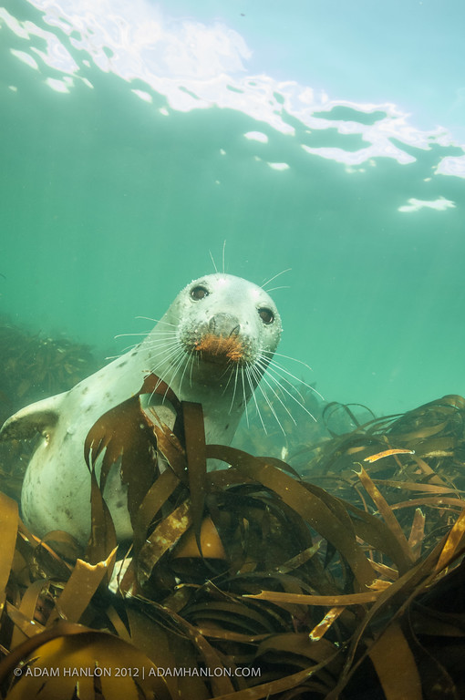 Rusty nosed seal