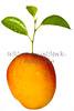 Mango Life