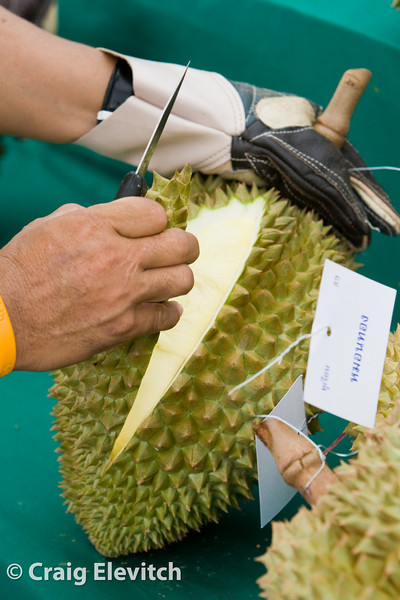 A durian being opened for judging.
