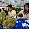 Entries for the fruit quality contest come in all morning on the first day of the festival.