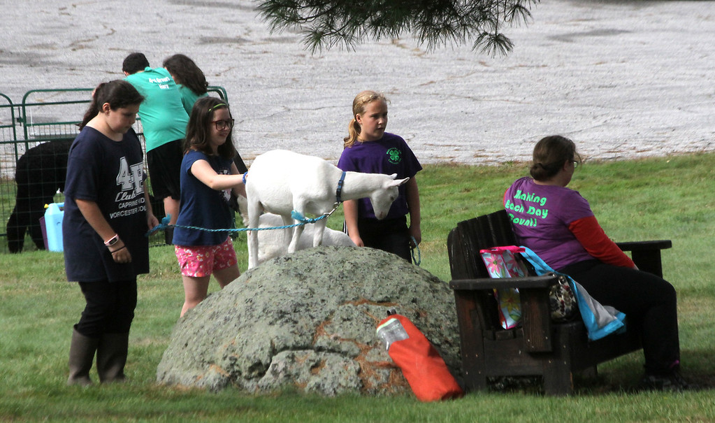 . Goats and kids from the Wekepeke 4-H Club of Lancaster, at the Fruitlands Harvest Festival in Harvard. Nashoba Valley Voice Photo by David H. Brow