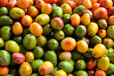 Pile of jocote fruits aka mombin hog plum and sineguela sold at a local fresh market in San Jose Costa Rica