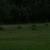 Hard to see, but there is a deer lying on the grass in this photo. It looked worse when I brightened it up.