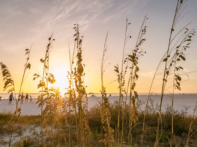 Sea Oat Sunset, Ft Myers Beach, Florida